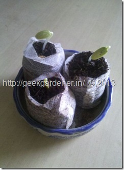 Coco-Coir-Pellet-Germination