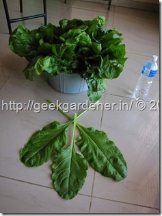 CommercialHydroponicsNFTSetup-0723