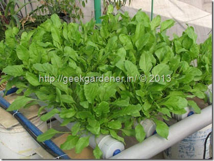 NFT SPinach