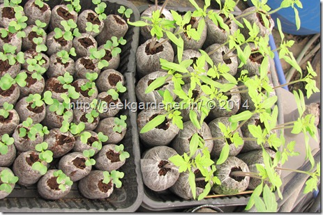Growing San Marzano Tomatoes[