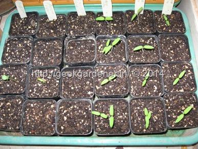 seed starting mix geekgardener
