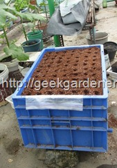 sow-seeds-big-pot2-geekgardener