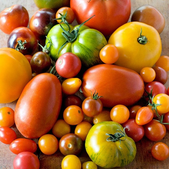 Heirloom tomatoes in India