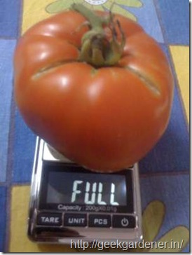 tomato-weight